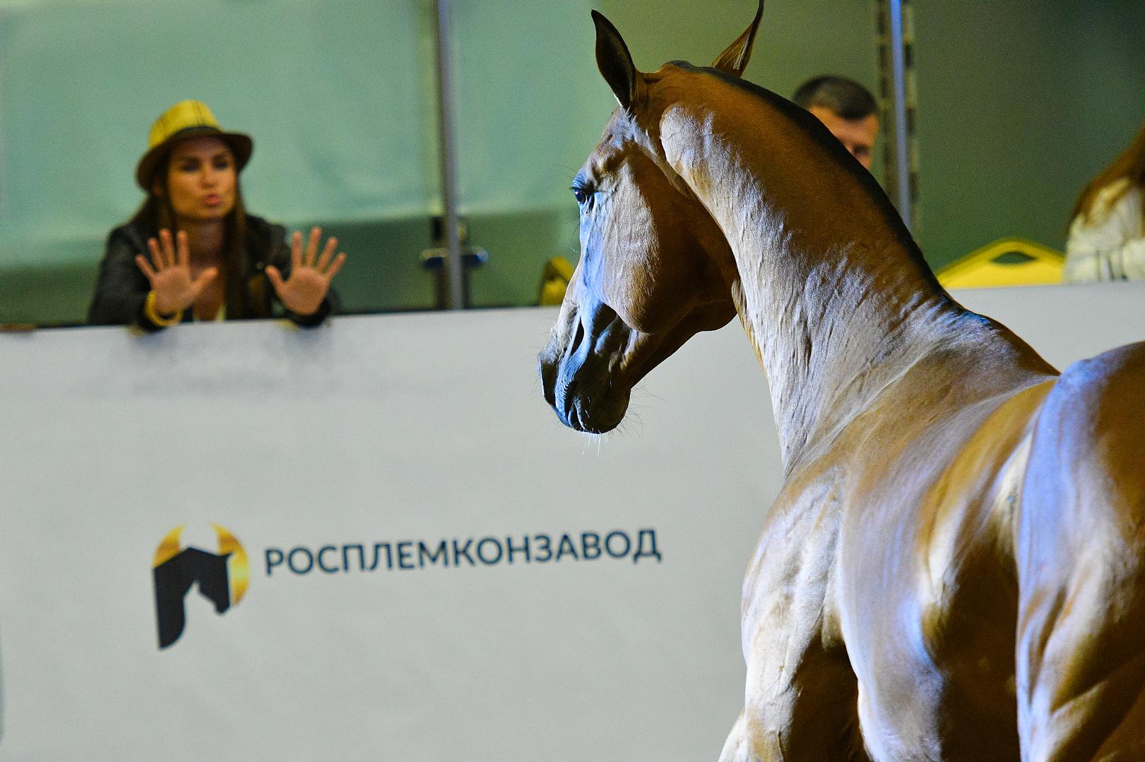 Фото Артура Бабоева